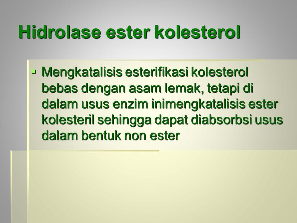 Hidrolase ester kolesterol  Mengkatalisis esterifikasi kolesterol bebas dengan asam lemak, tetapi di dalam usus enzim inimengkatalisis ester kolester