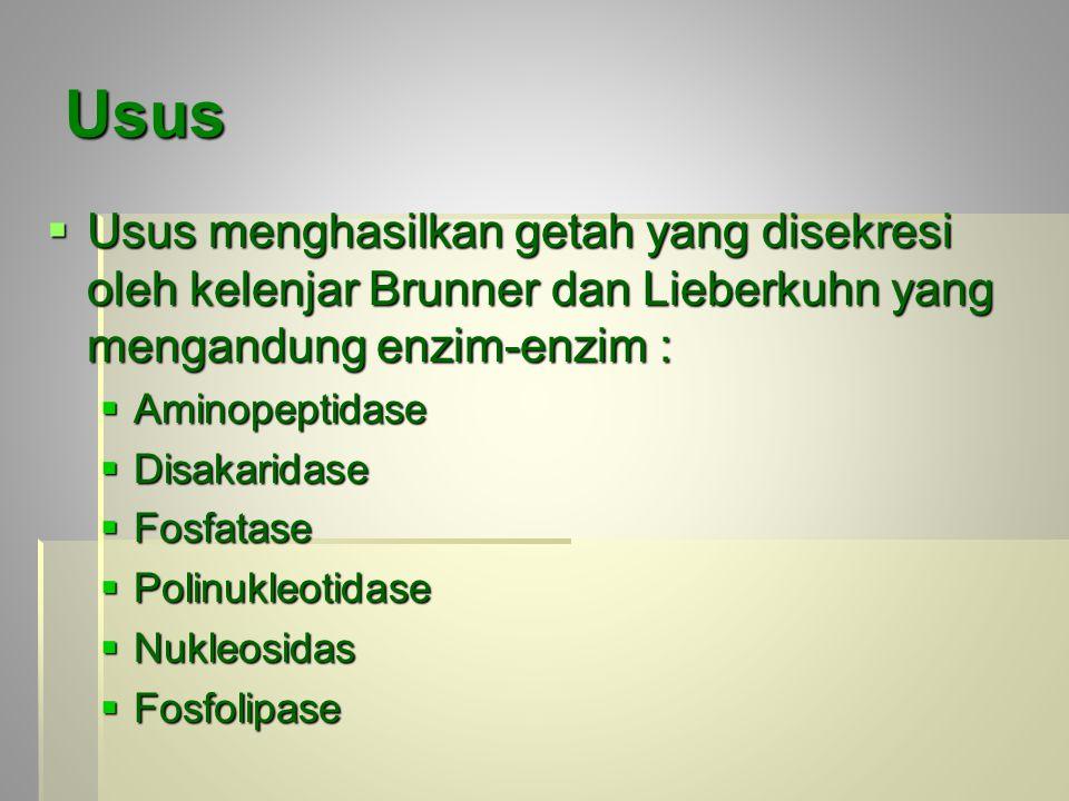 Usus  Usus menghasilkan getah yang disekresi oleh kelenjar Brunner dan Lieberkuhn yang mengandung enzim-enzim :  Aminopeptidase  Disakaridase  Fosfatase  Polinukleotidase  Nukleosidas  Fosfolipase