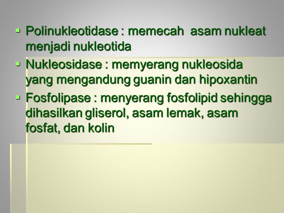  Polinukleotidase : memecah asam nukleat menjadi nukleotida  Nukleosidase : memyerang nukleosida yang mengandung guanin dan hipoxantin  Fosfolipase : menyerang fosfolipid sehingga dihasilkan gliserol, asam lemak, asam fosfat, dan kolin