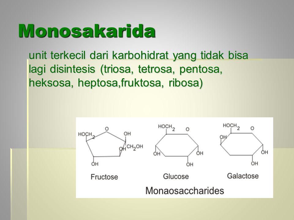 Monosakarida unit terkecil dari karbohidrat yang tidak bisa lagi disintesis (triosa, tetrosa, pentosa, heksosa, heptosa,fruktosa, ribosa)