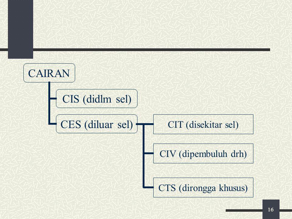 16 CIT (disekitar sel) CIV (dipembuluh drh) CTS (dirongga khusus)