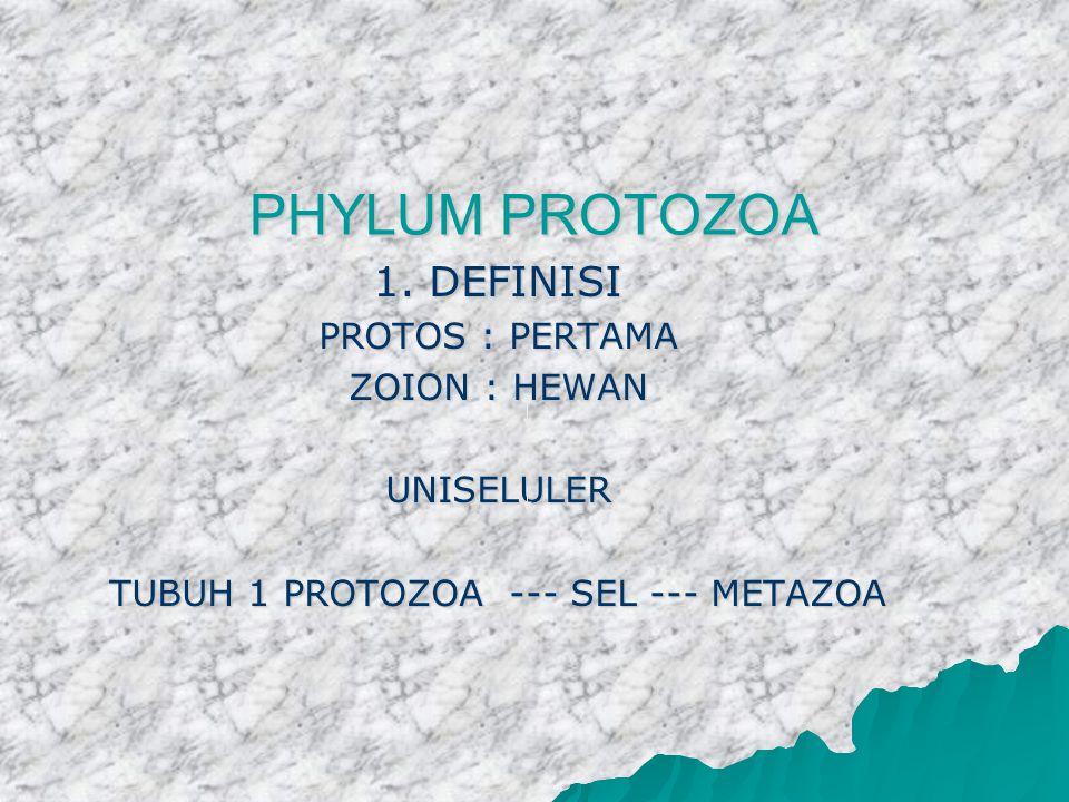 PHYLUM PROTOZOA 1. DEFINISI PROTOS : PERTAMA ZOION : HEWAN UNISELULER TUBUH 1 PROTOZOA --- SEL --- METAZOA