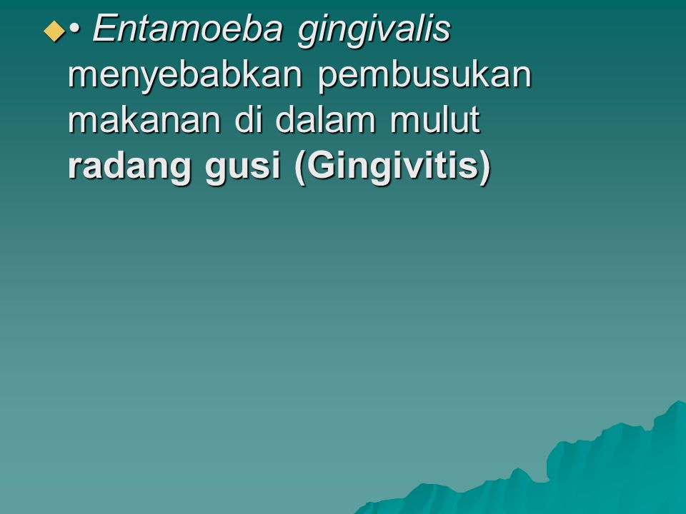  Entamoeba gingivalis menyebabkan pembusukan makanan di dalam mulut radang gusi (Gingivitis)
