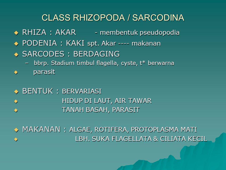 CLASS RHIZOPODA / SARCODINA  RHIZA : AKAR - membentuk pseudopodia  PODENIA : KAKI spt. Akar ---- makanan  SARCODES : BERDAGING – bbrp. Stadium timb