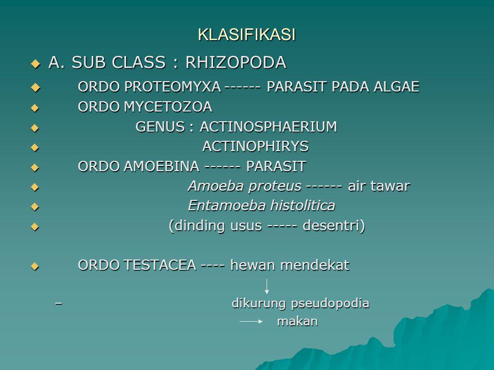 KLASIFIKASI  A. SUB CLASS : RHIZOPODA  ORDO PROTEOMYXA ------ PARASIT PADA ALGAE  ORDO MYCETOZOA  GENUS : ACTINOSPHAERIUM  ACTINOPHIRYS  ORDO AM