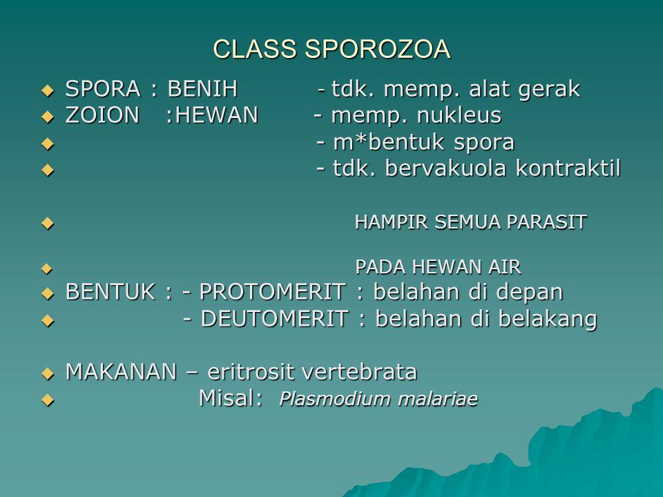 CLASS SPOROZOA  SPORA : BENIH - tdk. memp. alat gerak  ZOION :HEWAN - memp. nukleus  - m*bentuk spora  - tdk. bervakuola kontraktil  HAMPIR SEMUA