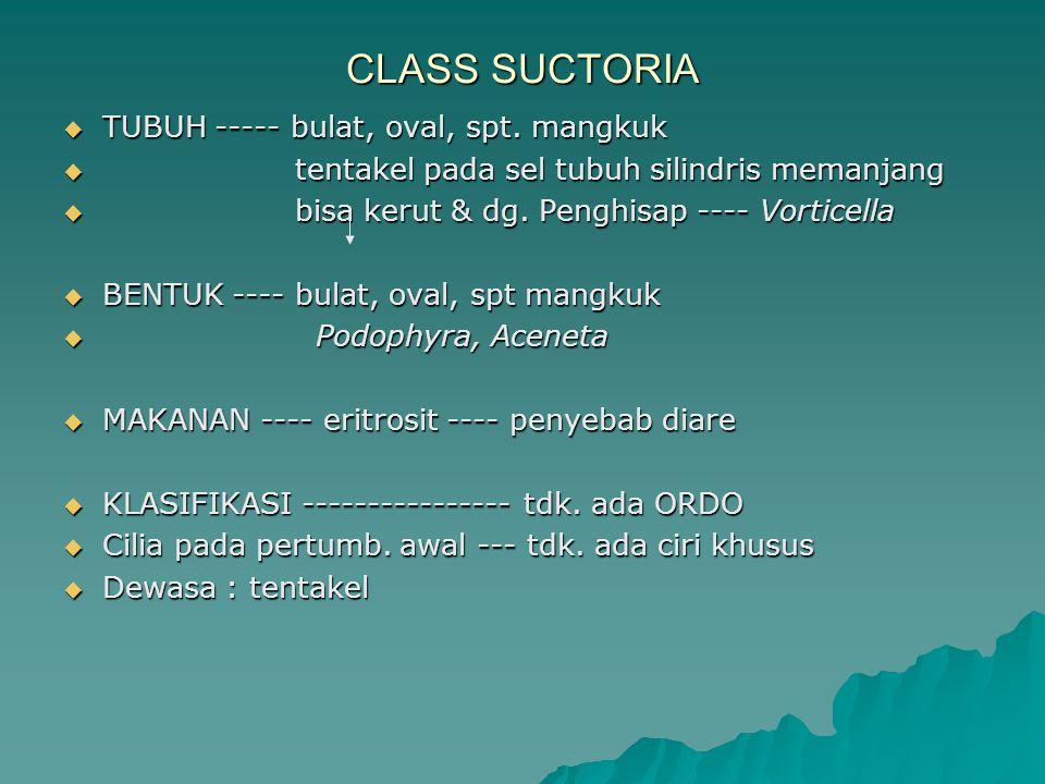 CLASS SUCTORIA  TUBUH ----- bulat, oval, spt. mangkuk  tentakel pada sel tubuh silindris memanjang  bisa kerut & dg. Penghisap ---- Vorticella  BE