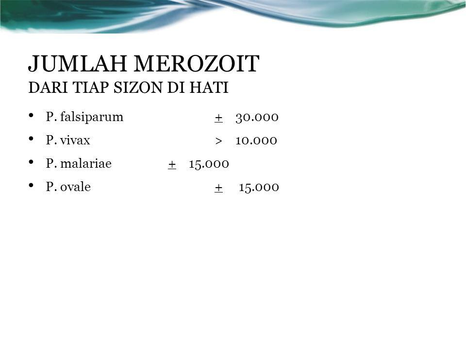 JUMLAH MEROZOIT DARI TIAP SIZON DI HATI P. falsiparum+ 30.000 P. vivax> 10.000 P. malariae+ 15.000 P. ovale+ 15.000