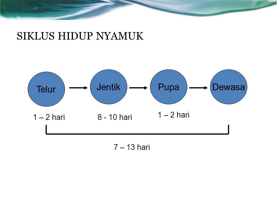SIKLUS HIDUP NYAMUK Telur JentikPupaDewasa 1 – 2 hari8 - 10 hari 1 – 2 hari 7 – 13 hari