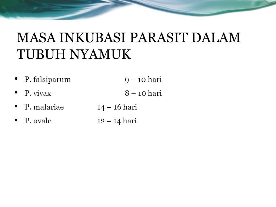 MASA INKUBASI PARASIT DALAM TUBUH NYAMUK P. falsiparum9 – 10 hari P.