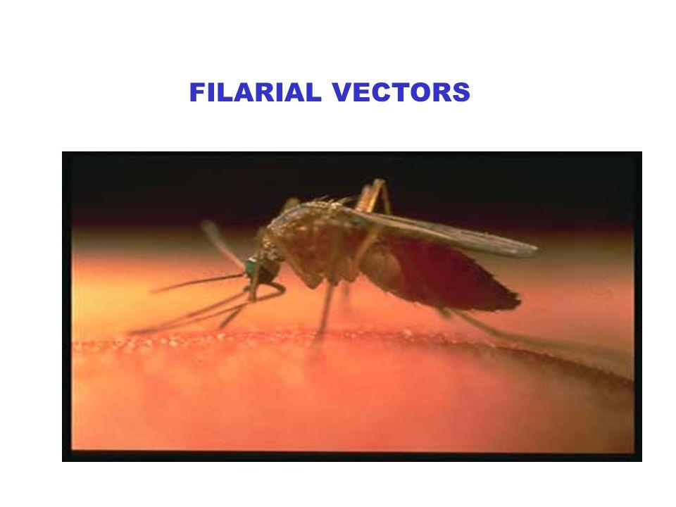 FILARIAL VECTORS
