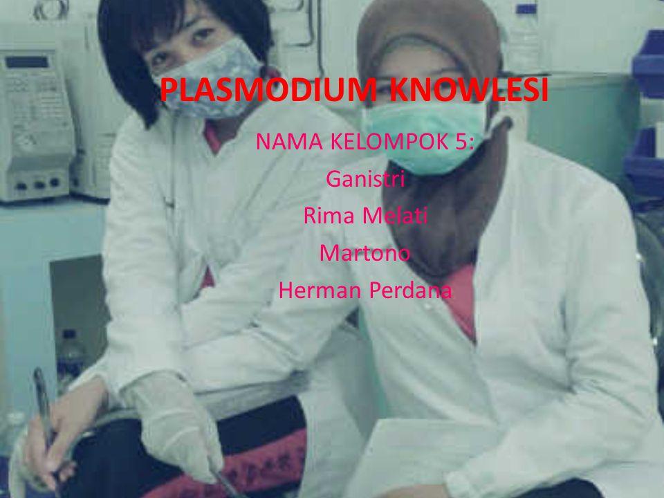 Plasmodium knowlesi Plasmodium knowlesi adalah parasit dari genus Plasmodium yang secara alami menginfeksi monyet ekor panjang (Macaca fascicularis).Parasit ini banyak ditemui di Asia Tenggara dan sudah menyerang manusia.P.