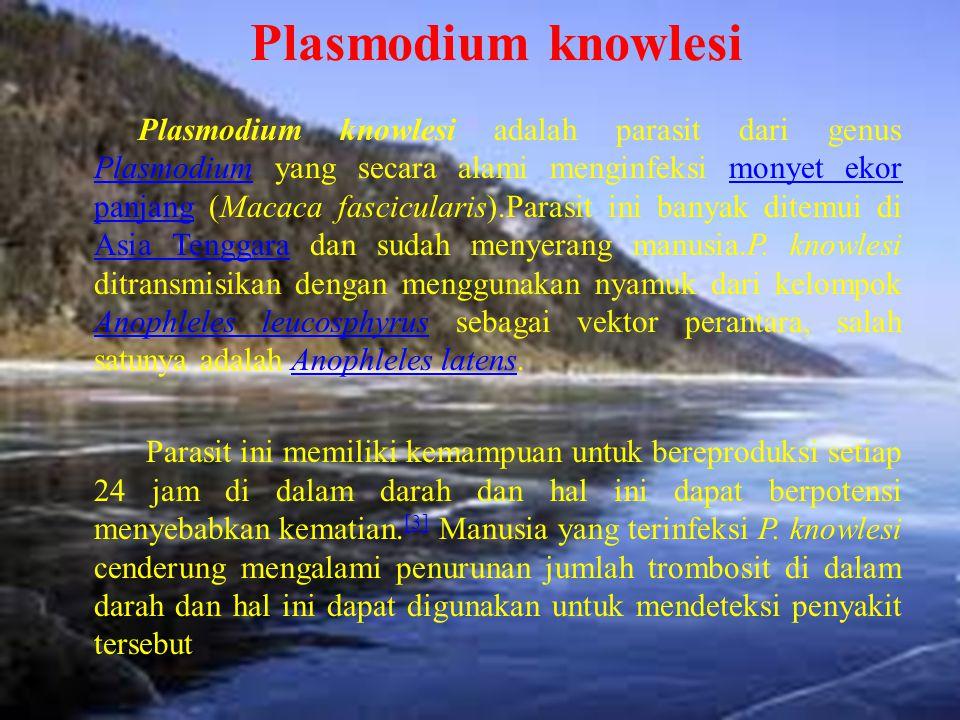 Plasmodium knowlesi Plasmodium knowlesi adalah parasit dari genus Plasmodium yang secara alami menginfeksi monyet ekor panjang (Macaca fascicularis).P