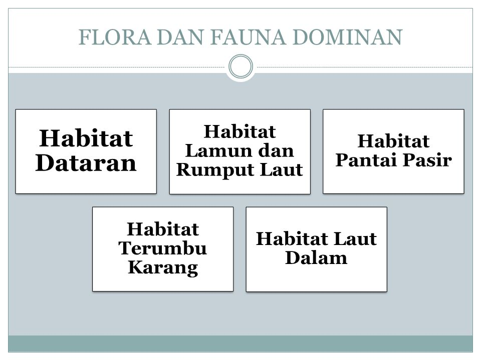 FLORA DAN FAUNA DOMINAN Habitat Dataran Habitat Lamun dan Rumput Laut Habitat Pantai Pasir Habitat Terumbu Karang Habitat Laut Dalam