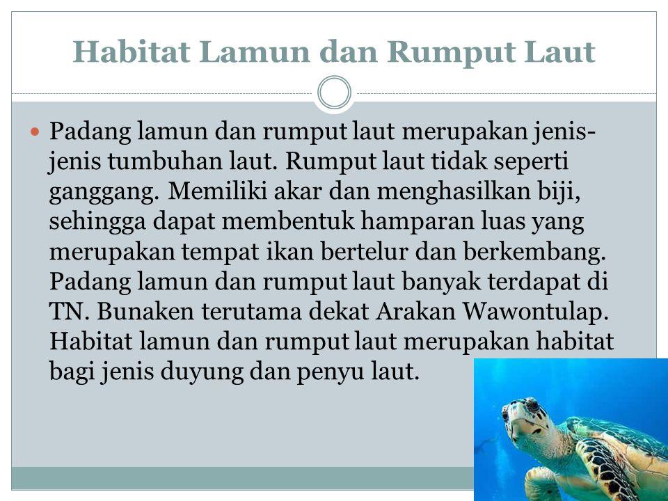 Habitat Lamun dan Rumput Laut Padang lamun dan rumput laut merupakan jenis- jenis tumbuhan laut. Rumput laut tidak seperti ganggang. Memiliki akar dan