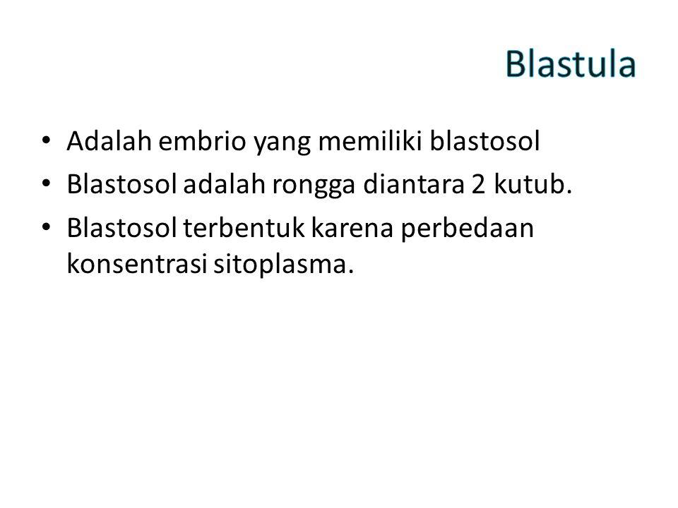 Adalah embrio yang memiliki blastosol Blastosol adalah rongga diantara 2 kutub.