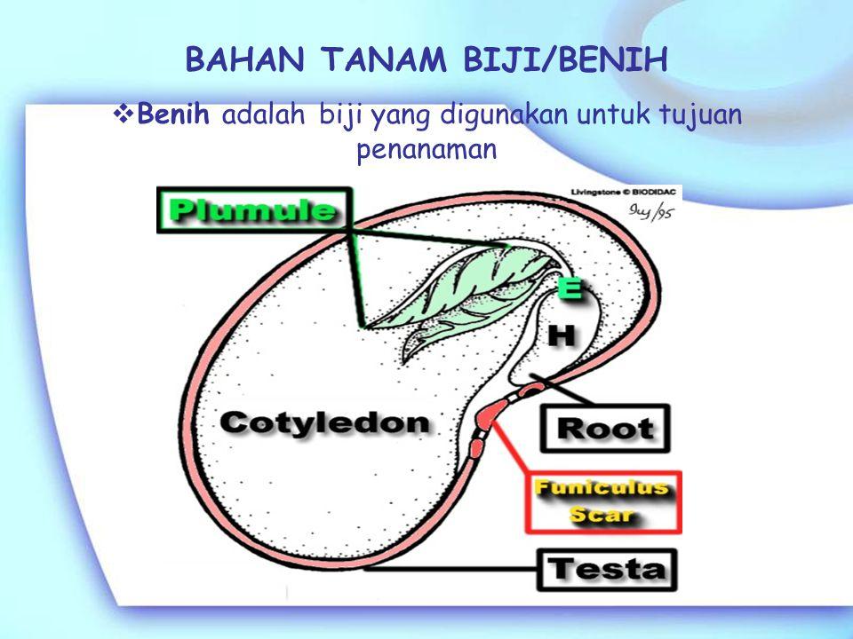Kebanyakan legum dapat ditanam dengan biji. Menanam rumput dengan biji kurang dapat diandalkan karena biji rumput: sulit disimpan untuk waktu yang lam