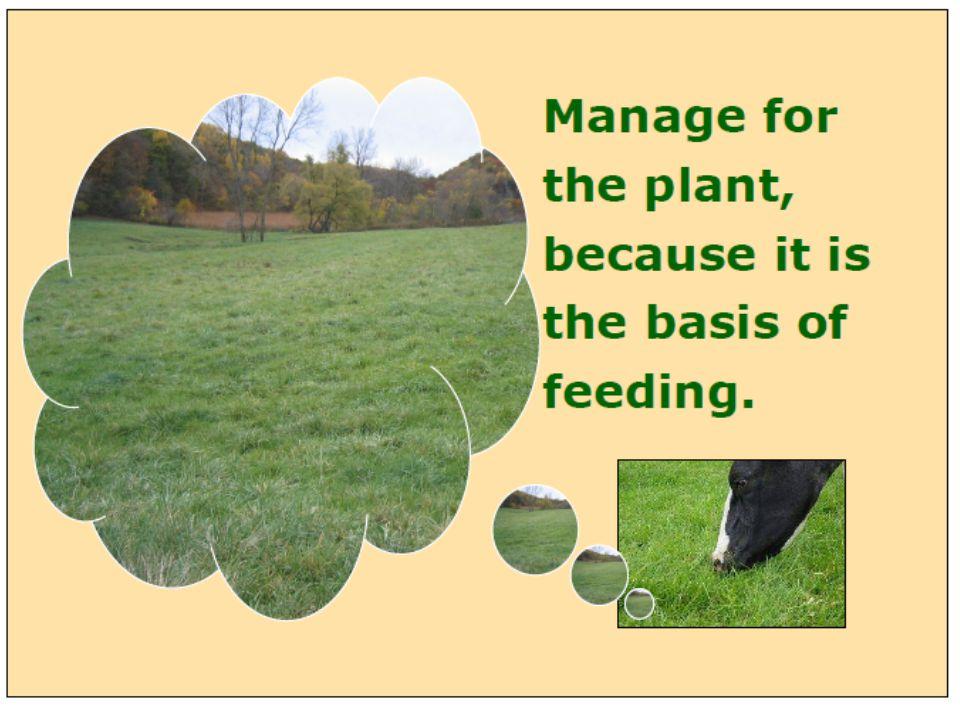 Untuk menjamin perkecambahan dan pertumbuhan tanaman, benih perlu mendapat perlakuan : a.Peretasan benih dan uji perkecambahan b.Pemberian inokulan Rhizobium untuk benih leguminosa c.Penggunaan pestisida untuk mencegah serangan hama