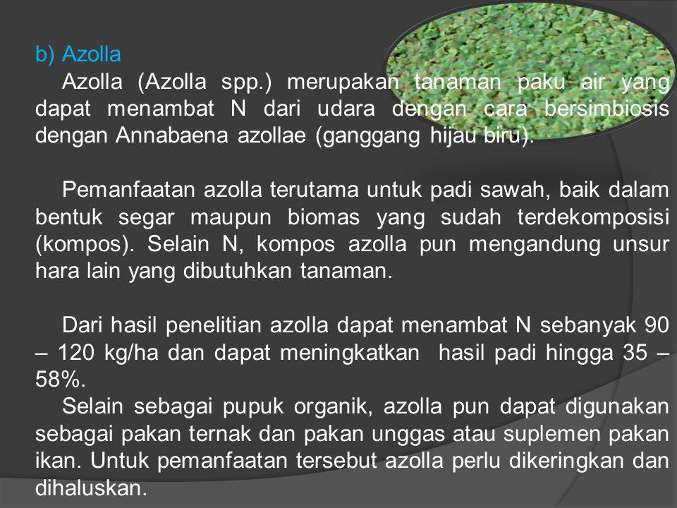 b)Azolla Azolla (Azolla spp.) merupakan tanaman paku air yang dapat menambat N dari udara dengan cara bersimbiosis dengan Annabaena azollae (ganggang hijau biru).
