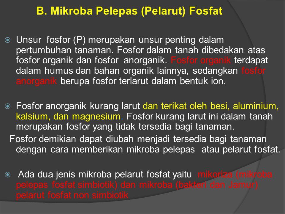 B. Mikroba Pelepas (Pelarut) Fosfat  Unsur fosfor (P) merupakan unsur penting dalam pertumbuhan tanaman. Fosfor dalam tanah dibedakan atas fosfor org