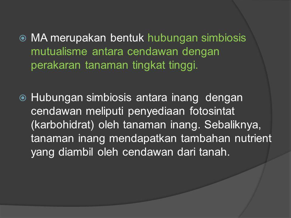  MA merupakan bentuk hubungan simbiosis mutualisme antara cendawan dengan perakaran tanaman tingkat tinggi.  Hubungan simbiosis antara inang dengan
