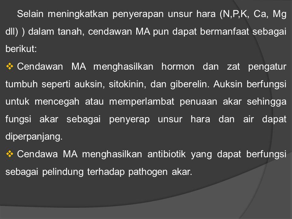 Selain meningkatkan penyerapan unsur hara (N,P,K, Ca, Mg dll) ) dalam tanah, cendawan MA pun dapat bermanfaat sebagai berikut:  Cendawan MA menghasilkan hormon dan zat pengatur tumbuh seperti auksin, sitokinin, dan giberelin.