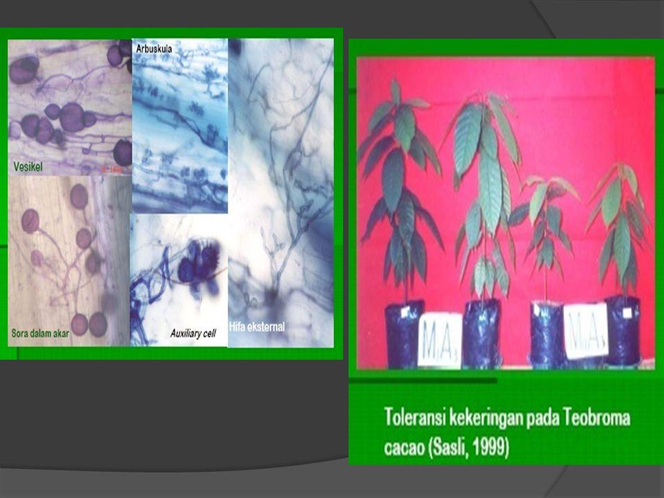 Pertumbuhan Bibit Kelapa Sawit Dengan Pemberian CMA Pada Tanah Histosol