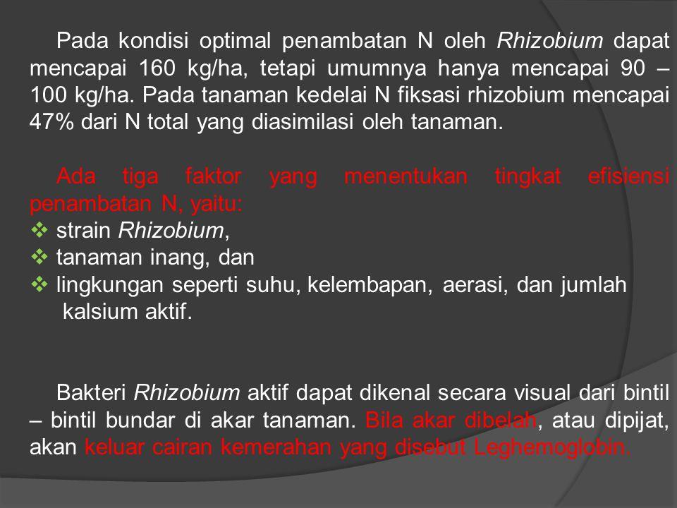 Pada kondisi optimal penambatan N oleh Rhizobium dapat mencapai 160 kg/ha, tetapi umumnya hanya mencapai 90 – 100 kg/ha.