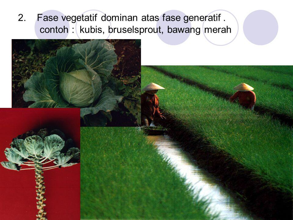2. Fase vegetatif dominan atas fase generatif. contoh : kubis, bruselsprout, bawang merah