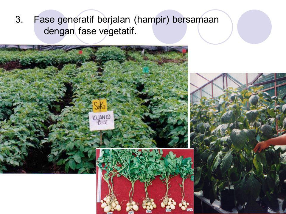3. Fase generatif berjalan (hampir) bersamaan dengan fase vegetatif.