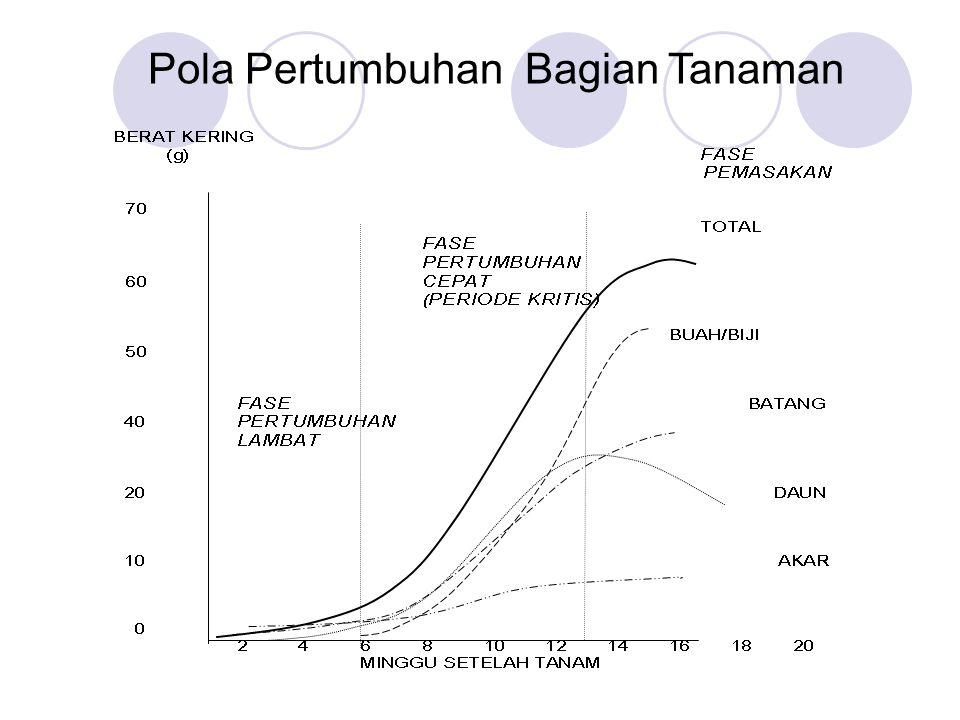 FASE PERTUMBUHAN TANAMAN Fase Pertumbuhan Awal ( initial phase ) - Pertumbuhan lambat - Organ tanaman belum berfungsi (tgt.