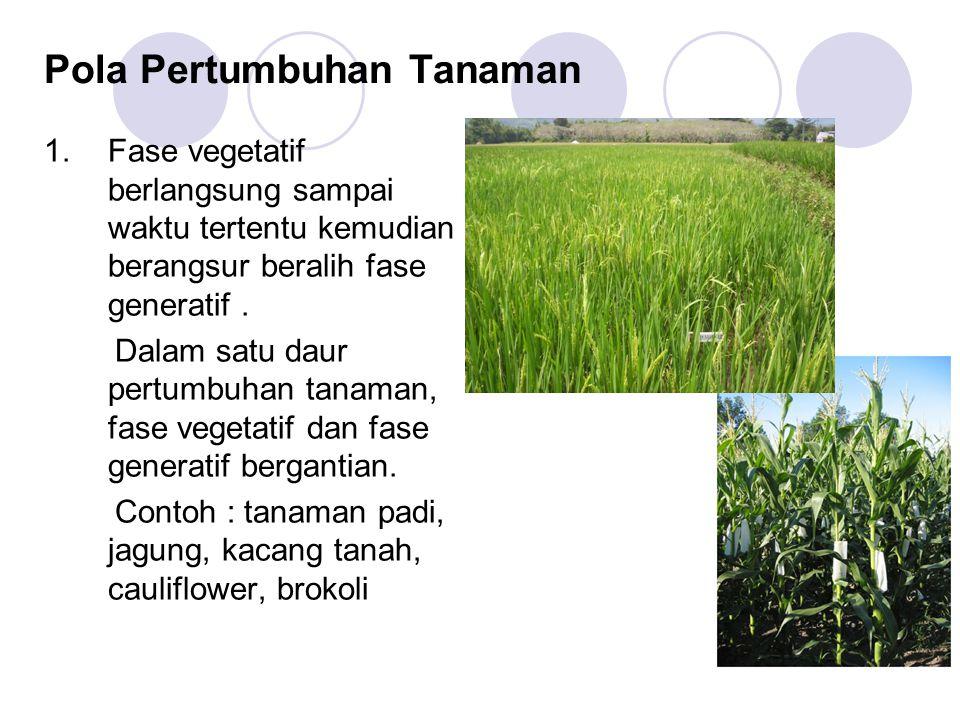 Pola Pertumbuhan Tanaman 1.Fase vegetatif berlangsung sampai waktu tertentu kemudian berangsur beralih fase generatif. Dalam satu daur pertumbuhan tan