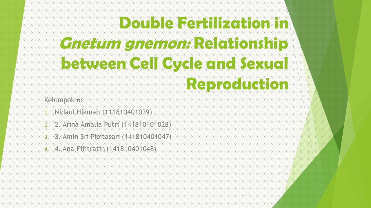 Double Fertilization in Gnetum gnemon: Relationship between Cell Cycle and Sexual Reproduction Kelompok 6: 1. Nidaul Hikmah (111810401039) 2. 2. Arina