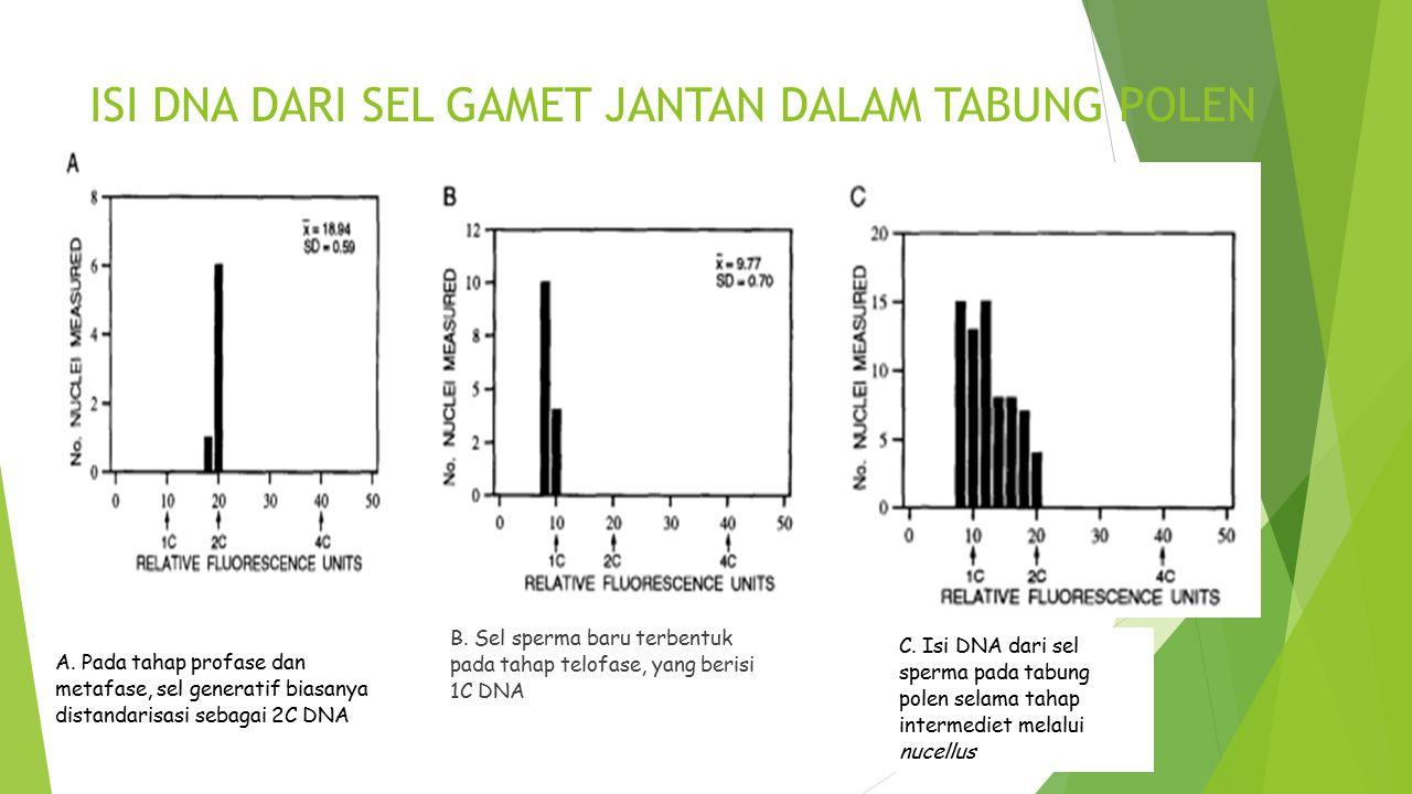 ISI DNA DARI SEL GAMET JANTAN DALAM TABUNG POLEN A. Pada tahap profase dan metafase, sel generatif biasanya distandarisasi sebagai 2C DNA C. Isi DNA d