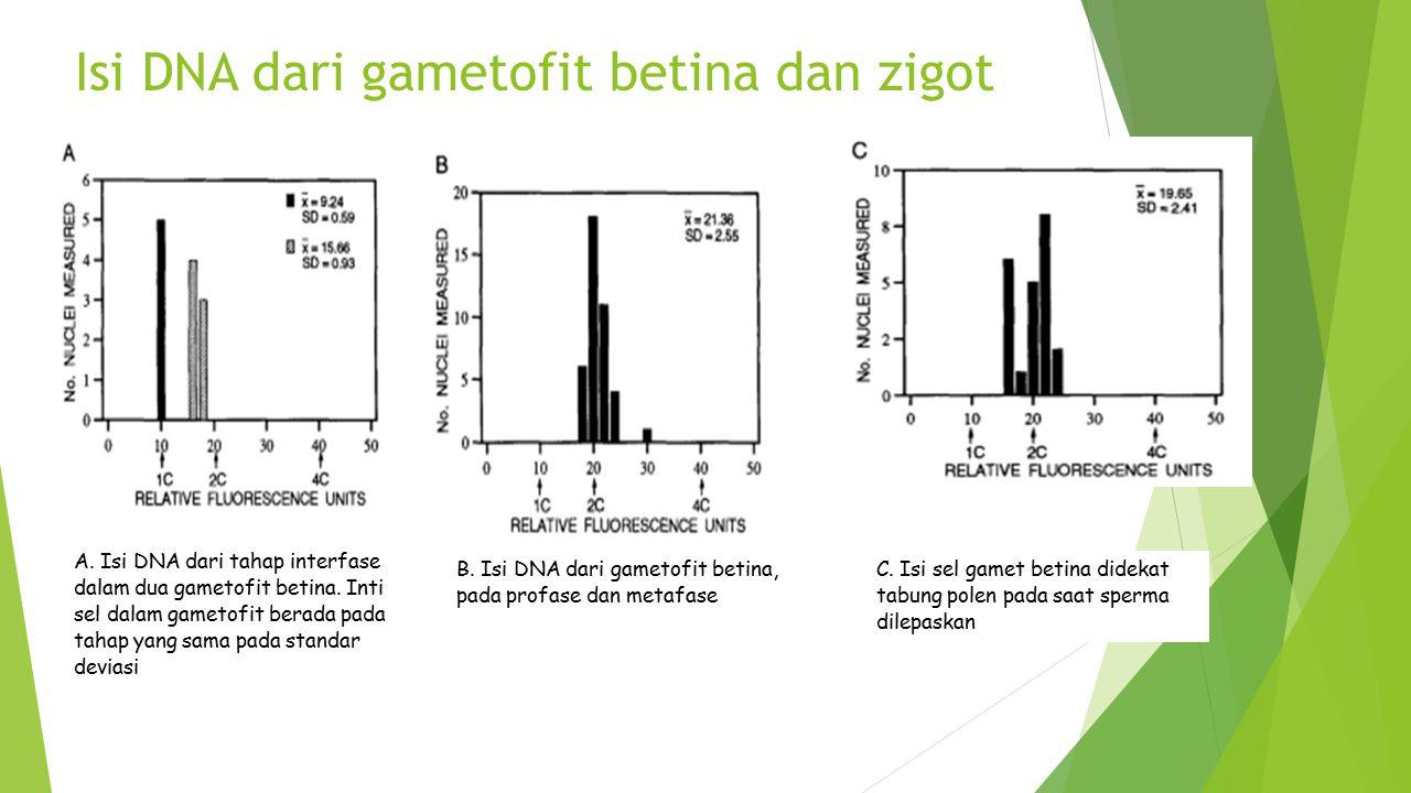 Isi DNA dari gametofit betina dan zigot A. Isi DNA dari tahap interfase dalam dua gametofit betina. Inti sel dalam gametofit berada pada tahap yang sa