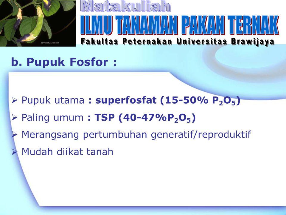 b. Pupuk Fosfor :  Pupuk utama : superfosfat (15-50% P 2 O 5 )  Paling umum : TSP (40-47%P 2 O 5 )  Merangsang pertumbuhan generatif/reproduktif 