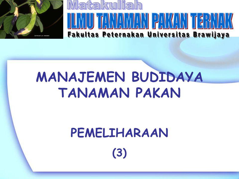 MANAJEMEN BUDIDAYA TANAMAN PAKAN PEMELIHARAAN (3)