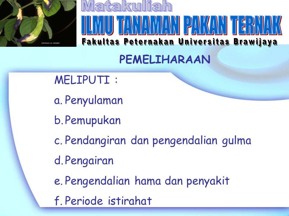 PEMELIHARAAN MELIPUTI : a.Penyulaman b.Pemupukan c.Pendangiran dan pengendalian gulma d.Pengairan e.Pengendalian hama dan penyakit f.Periode istirahat