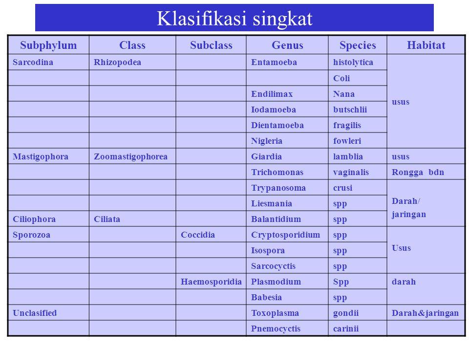 Klasifikasi singkat SubphylumClassSubclassGenusSpeciesHabitat SarcodinaRhizopodeaEntamoebahistolytica usus Coli EndilimaxNana Iodamoebabutschlii Dient