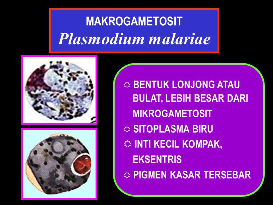 MAKROGAMETOSIT Plasmodium malariae  BENTUK LONJONG ATAU BULAT, LEBIH BESAR DARI MIKROGAMETOSIT  SITOPLASMA BIRU R INTI KECIL KOMPAK, EKSENTRIS  PIG