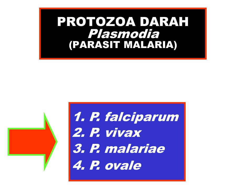 TROFOZOIT Plasmodium ovale 