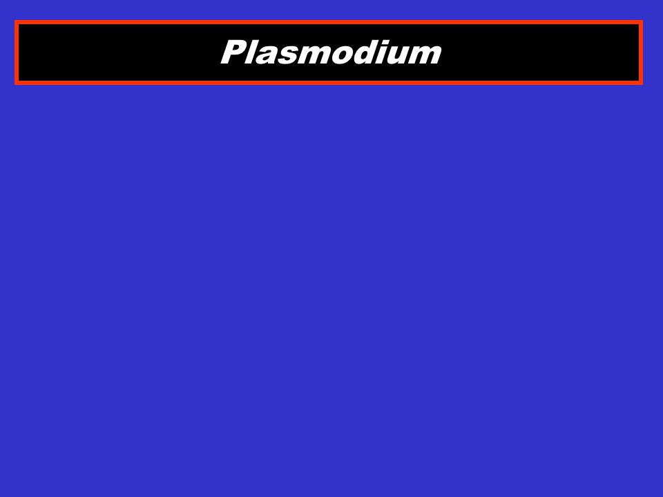 MAKROGAMETOSIT Plasmodium falciparum BENTUK LANGSING SPT PISANG AMBON PLASMA WARNA BIRU INTI PADAT KOMPAK, LETAK DI TENGAH PIGMEN MAL TERSEBAR DI SEKITAR INTI