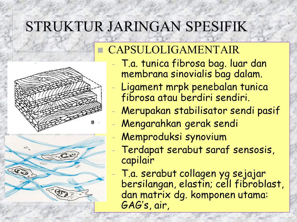 STRUKTUR JARINGAN SPESIFIK n CAPSULOLIGAMENTAIR – T.a. tunica fibrosa bag. luar dan membrana sinovialis bag dalam. – Ligament mrpk penebalan tunica fi