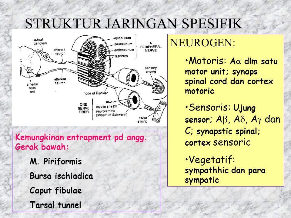 STRUKTUR JARINGAN SPESIFIK NEUROGEN: Motoris: A  dlm satu motor unit; synaps spinal cord dan cortex motoric Sensoris: Ujung sensor ; A , A , A  da