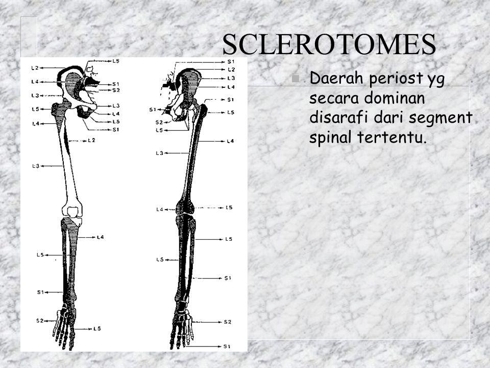 SCLEROTOMES n Daerah periost yg secara dominan disarafi dari segment spinal tertentu.
