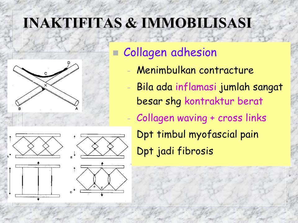INAKTIFITAS & IMMOBILISASI n Collagen adhesion – Menimbulkan contracture – Bila ada inflamasi jumlah sangat besar shg kontraktur berat – Collagen wavi