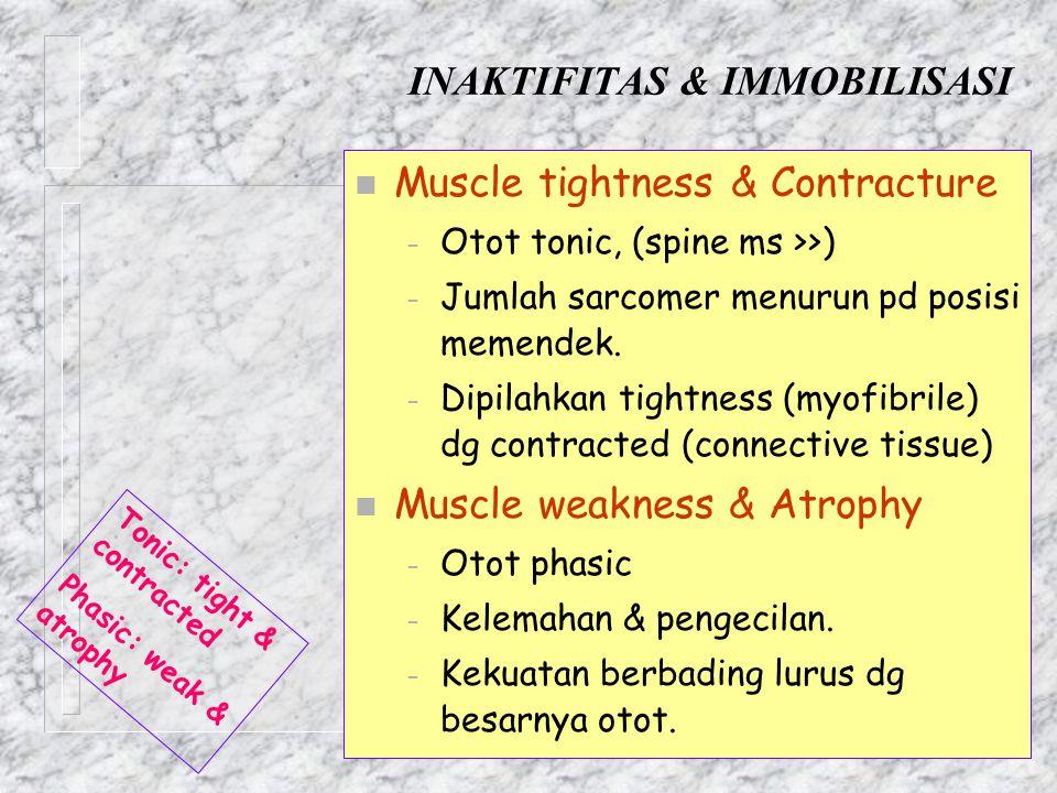 INAKTIFITAS & IMMOBILISASI n Muscle tightness & Contracture – Otot tonic, (spine ms >>) – Jumlah sarcomer menurun pd posisi memendek. – Dipilahkan tig