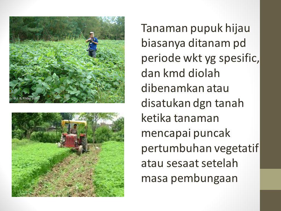 Tanaman pupuk hijau biasanya ditanam pd periode wkt yg spesific, dan kmd diolah dibenamkan atau disatukan dgn tanah ketika tanaman mencapai puncak per