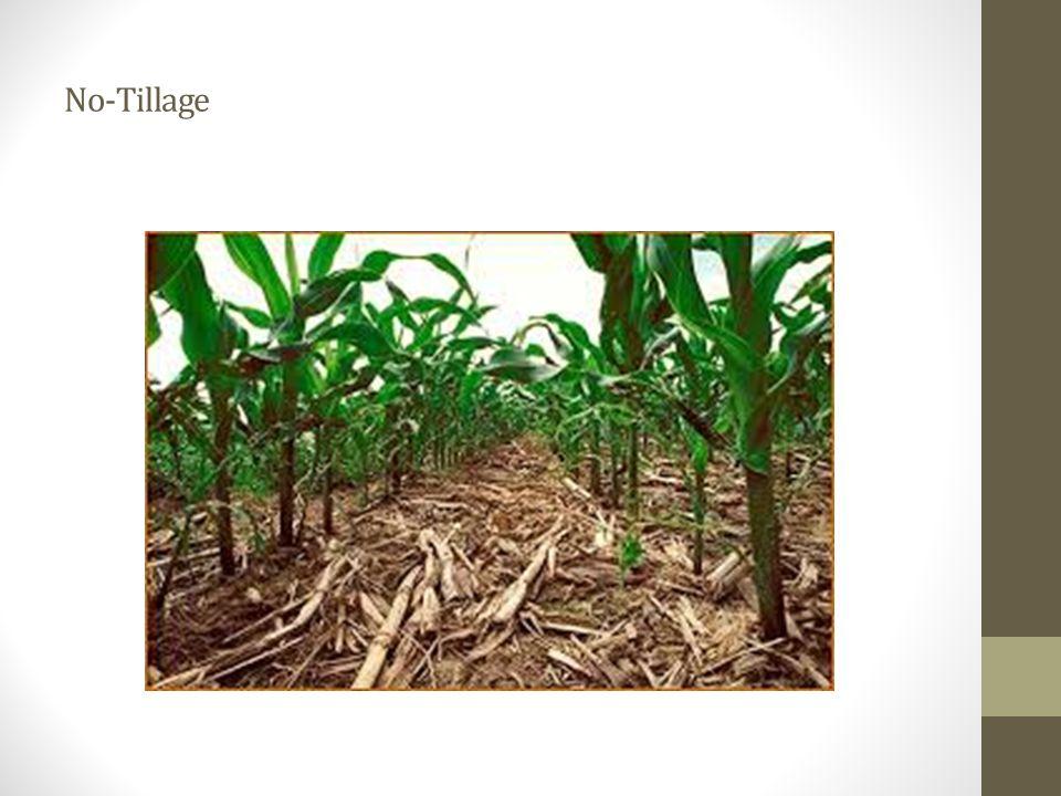 Adalah teknik menanam tanaman hanya pd lajur sempit yg telah diolah, sementara bidang tanah yang lain dibiarkan tdk diolah (untilled) Strip-till (minimum tillage)