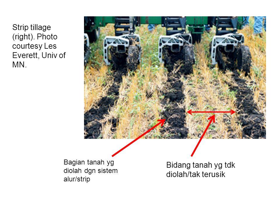 Bagian tanah yg diolah dgn sistem alur/strip Strip tillage (right).